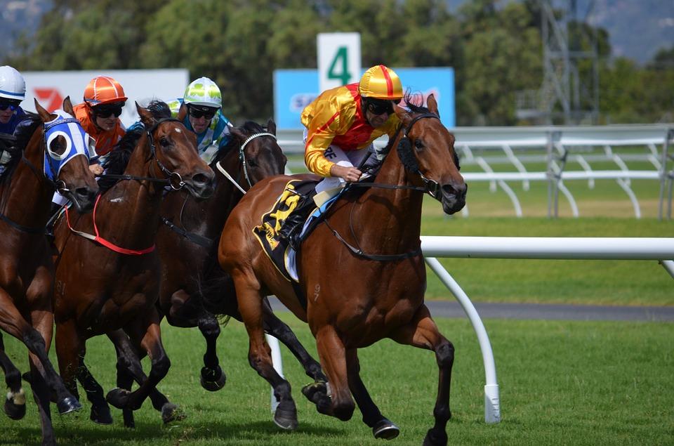 big priced horses betting